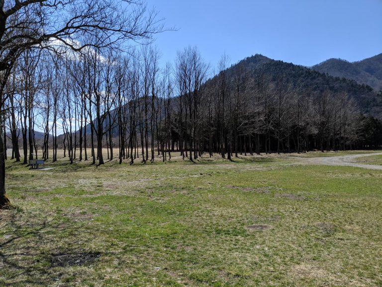 場内の散策:林