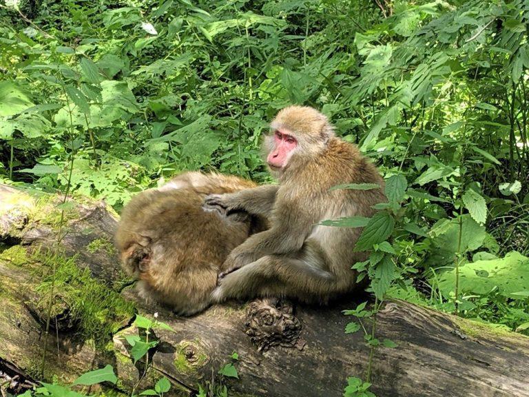 毛繕いする猿