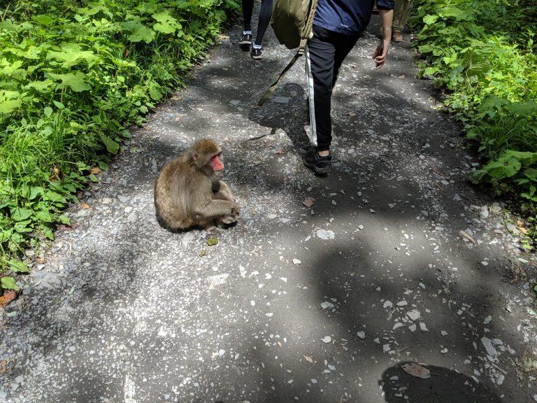 道の真ん中に座り込む猿