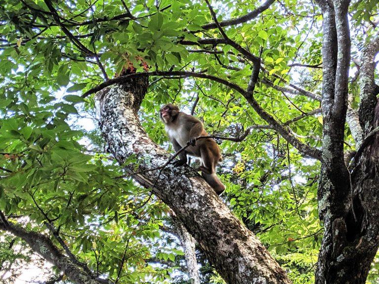 猿も木に登る