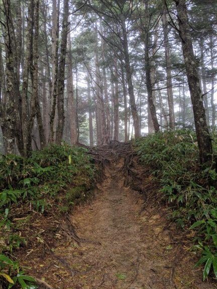 林の中の登り坂