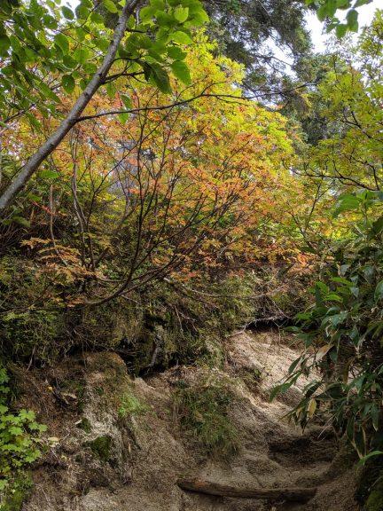 合戦小屋~燕山荘 紅葉