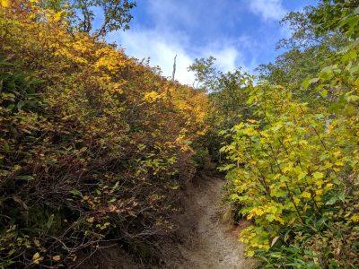 合戦小屋~燕山荘 紅葉する木々の間を歩く