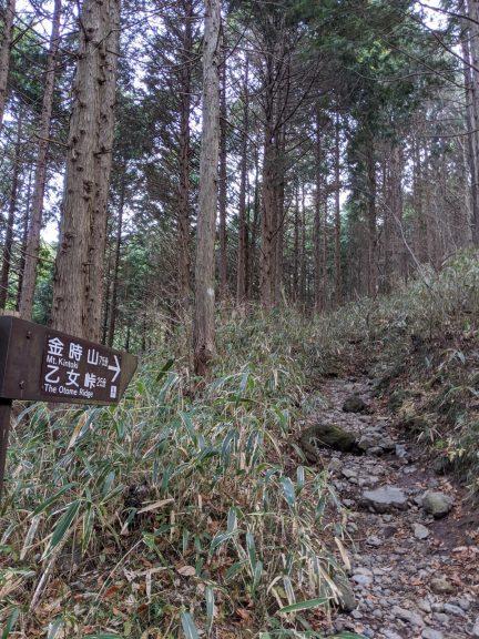 乙女・金時登山口からすぐの標識