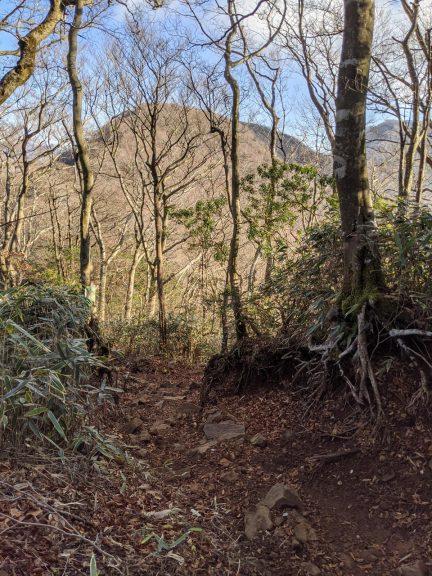 林の奥に山が二つ見える