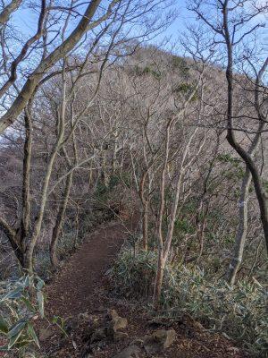 狭い尾根の先、林の奥の山