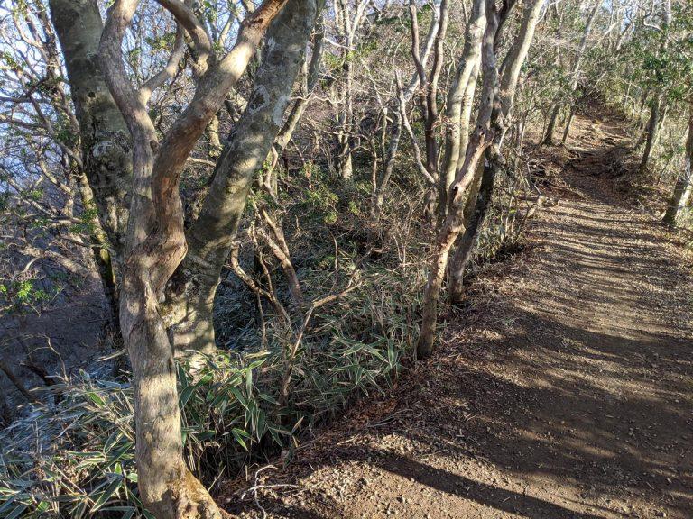 左右は草木に覆われているが切り立った崖
