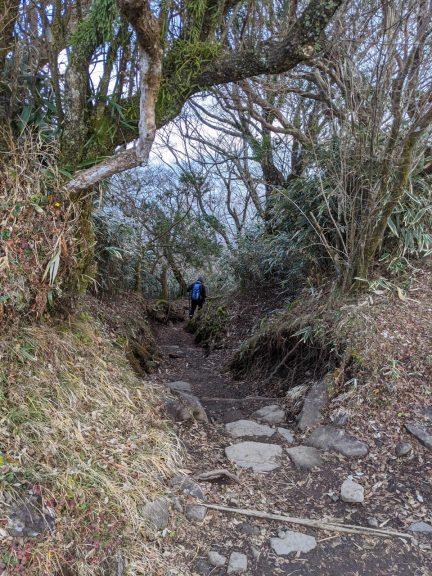 金時山から仙石原へ下りる
