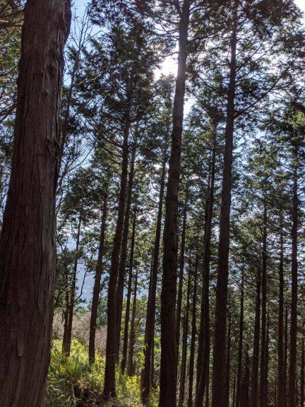背の高い木々に囲まれて歩く