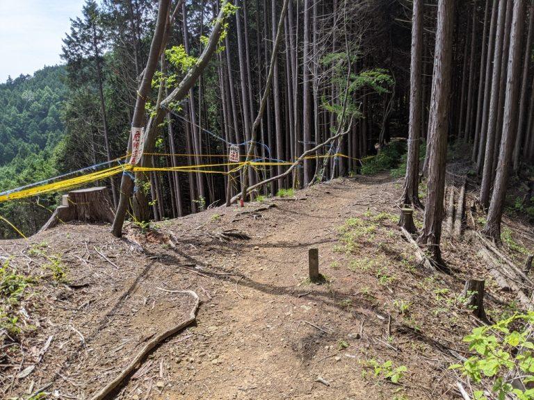 クロモ岩~麻生山 伐採中