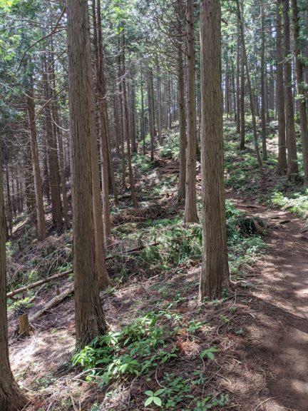 クロモ岩~麻生山の道