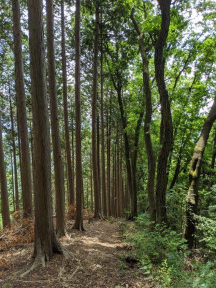 麻生山からの下り