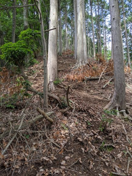 麻生山からの下り(振り返り)