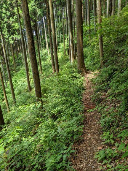 麻生山からの下り(折り返し後)