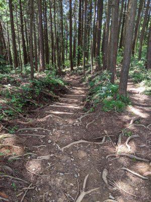 金比羅山方面へ下る階段
