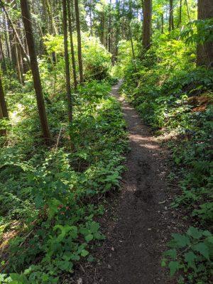 金比羅山方面へ歩く