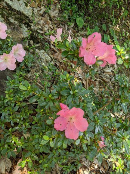 金比羅公園に咲く花