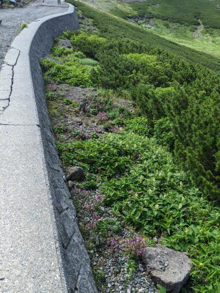 高山植物を見下ろす