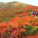 長いスロープを登るとそこにはオレンジの衣をまとった栗駒山がいました