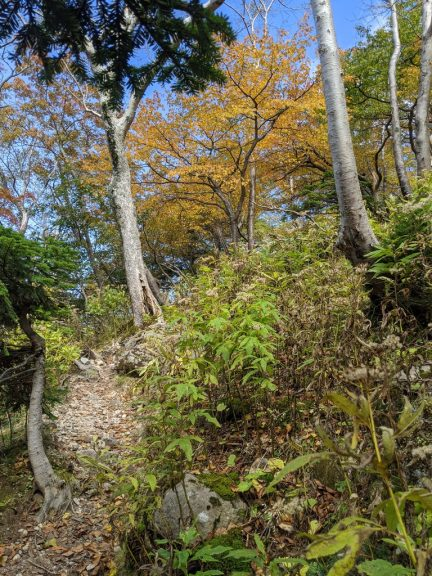 紅葉する木々を見ながら登る