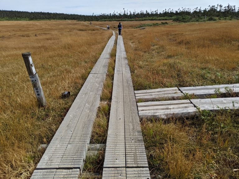 湿原の中の分岐